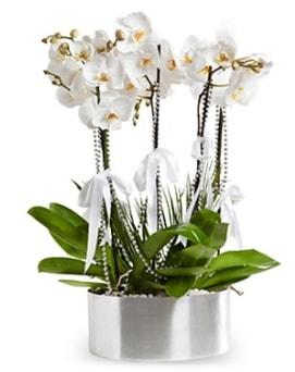 Beş dallı metal saksıda beyaz orkide  Bayburt çiçek yolla