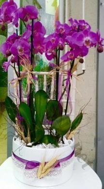 Seramik vazoda 4 dallı mor lila orkide  Bayburt online çiçek gönderme sipariş