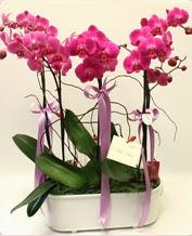 Beyaz seramik içerisinde 4 dallı orkide  Bayburt ucuz çiçek gönder