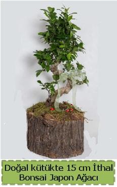 Doğal kütükte İthal bonsai japon ağacı  Bayburt çiçek gönderme