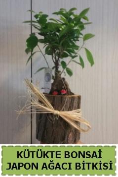 Kütük içerisinde doğal bonsai ağacı  Bayburt çiçekçi telefonları