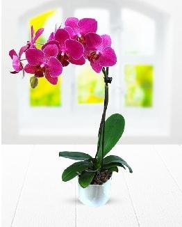 Tek dallı mor orkide  Bayburt çiçek satışı