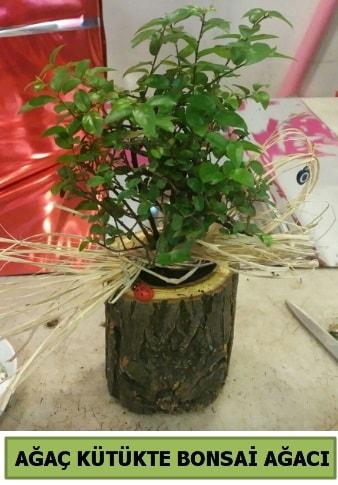 Doğal ağaç kütük içerisinde bonsai ağacı  Bayburt çiçek gönderme sitemiz güvenlidir