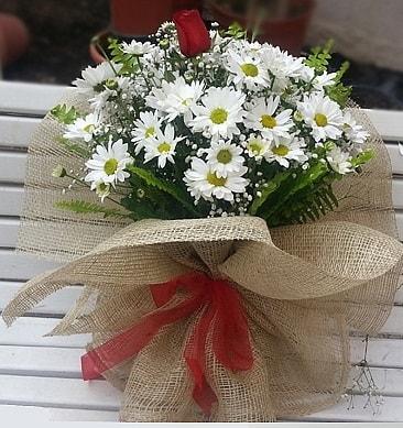 Papatya 1 adet kırmızı gül buketi  Bayburt çiçekçiler