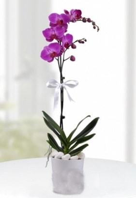 Tek dallı saksıda mor orkide çiçeği  Bayburt çiçekçiler